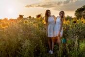 Letzte Abendsonne im Sonnenblumenfeld