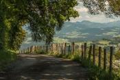 Weg vom Pfänder nach Bregenz/Vorarlberg